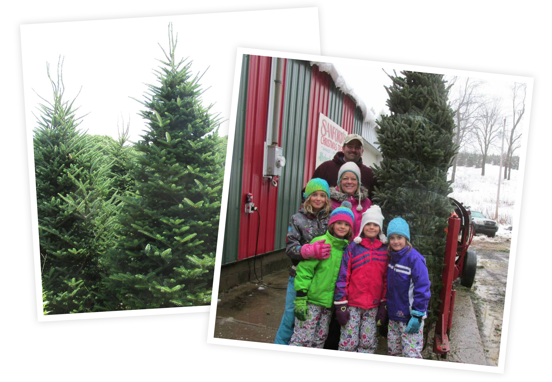 Cut Your Own Christmas Tree Near Me.Sanford Tree Farm Cut Your Own Christmas Trees